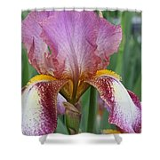 Iris 23 Shower Curtain