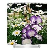Iris And Daisies Shower Curtain