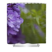 Jacaranda Mimosifolia Makawao Maui Hawaii Shower Curtain