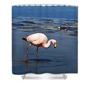 James Or Puna Flamingo Shower Curtain