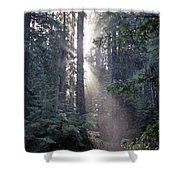 Jedediah Smith Redwoods State Park Redwoods National Park Del No Shower Curtain