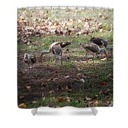 Juvenile Ibis Shower Curtain
