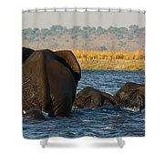 Kalahari Elephants Crossing Chobe River Shower Curtain