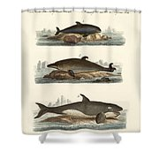 Kinds Of Whales Shower Curtain