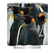 King Penguin Colony Shower Curtain