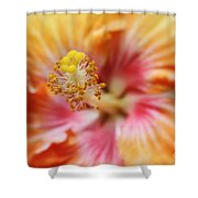 Ko Aloha Makamae E Ipo Aloalo Exotic Tropical Hibiscus Maui Hawaii Shower Curtain