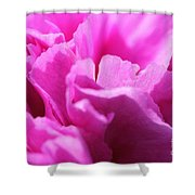Lavender Carnation Shower Curtain