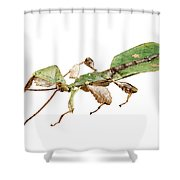 Leaf Insect Species Phyllium Bioculatum Male Shower Curtain