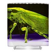 Leafhopper, Sem Shower Curtain by David M. Phillips