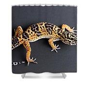 Leopard Gecko Eublepharis Macularius Shower Curtain