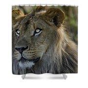 Lion King  Shower Curtain