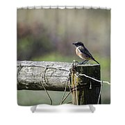 Litle Bird Shower Curtain
