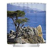 Lone Cypress Tree Shower Curtain