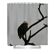 Looking Up To Bald Eagle's Shower Curtain