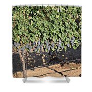 Lorimar Grapes Shower Curtain