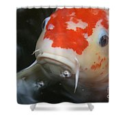 Lucky Koi 1 Shower Curtain