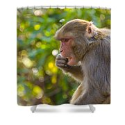 Macaque Eating An Orange Shower Curtain