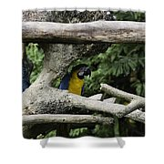 2 Macaws Framed By Tree Branches Inside The Jurong Bird Park Shower Curtain