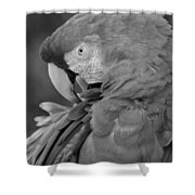 Macaws Of Color B W 17 Shower Curtain