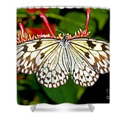 Malabar Tree Nymph Butterfly Shower Curtain