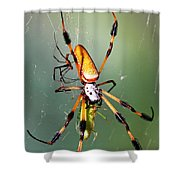 Male And Female Silk Spiders With Prey Shower Curtain
