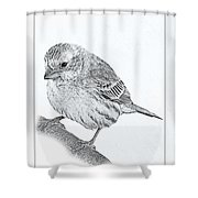 Male House Finch Sketch  Shower Curtain