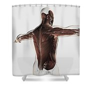 Male Muscle Anatomy Of The Human Back Shower Curtain