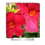 Mandevilla Named Sun Parasol Crimson Shower Curtain