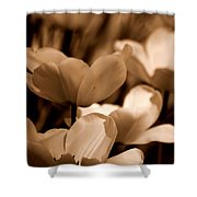 Many Tulips Shower Curtain