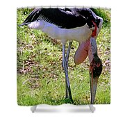 Marabou Stork Shower Curtain