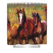 Mares And Foals Shower Curtain