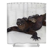 Marine Iguana Galapagos Shower Curtain