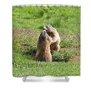 Marmots Shower Curtain