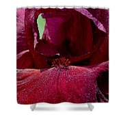 Maroon Iris 2 Shower Curtain