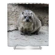 Rock Hyrax Headshot Shower Curtain