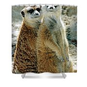 Meerkats Shower Curtain