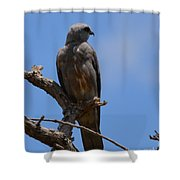 Merlin Falcon  Shower Curtain