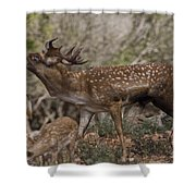 Mesopotamian Fallow Deer 3 Shower Curtain