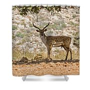 Mesopotamian Fallow Deer 5 Shower Curtain