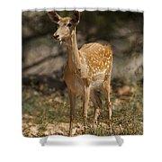 Mesopotamian Fallow Deer  Shower Curtain