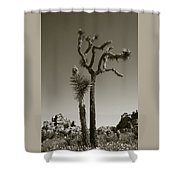 Joshua Tree National Park Landscape No 2 In Sepia Shower Curtain