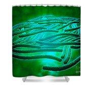 Microscopic View Of Legionella Shower Curtain