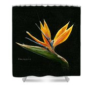 Midnight Paradise Shower Curtain