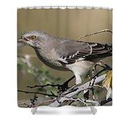 Mocking Bird With Ripe Hackberry Shower Curtain
