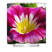 Morning Glory Named Red Ensign Shower Curtain