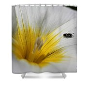 Morning Glory Named White Ensign Shower Curtain