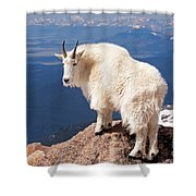 Mountain Goat On Mount Evans Shower Curtain
