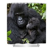 Mountain Gorilla And Infant Shower Curtain