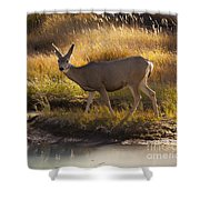 Mule Deer   #3950 Shower Curtain