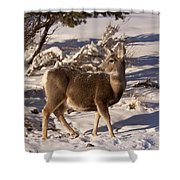 Mule Deer   #6339 Shower Curtain